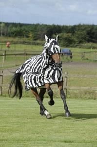 Bilde av Bucas Buzz off Zebra maske